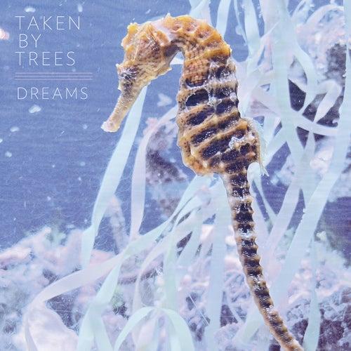 Dreams by Taken By Trees