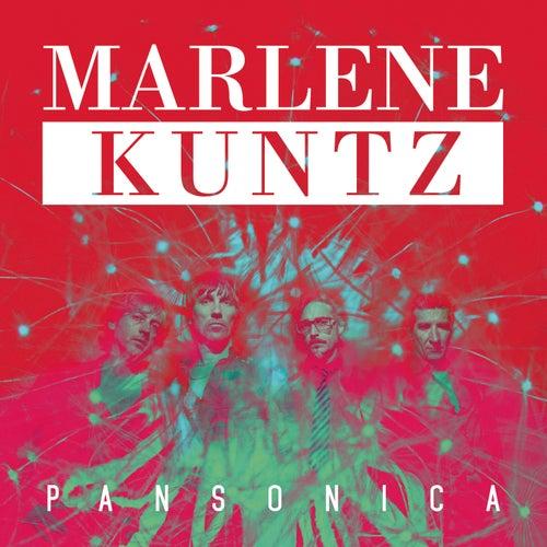 Pansonica by Marlene Kuntz