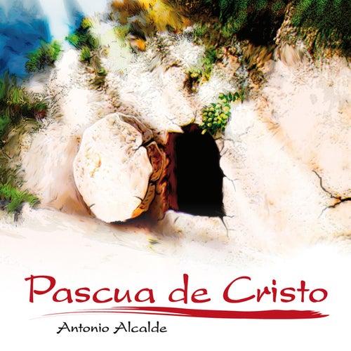 Pascua de Cristo de Antonio Alcalde
