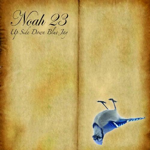Upside Down Bluejay by Noah23