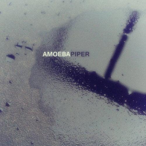 Piper by Amoeba