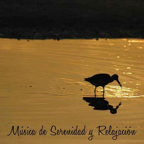 Musica de Serenidad y Relajacion – Musica Relajante para Hacer Yoga y Meditar von Relajacion Del Mar