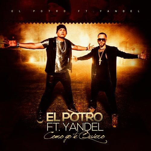 Como Yo Te Quiero (feat. Yandel) von El Potro