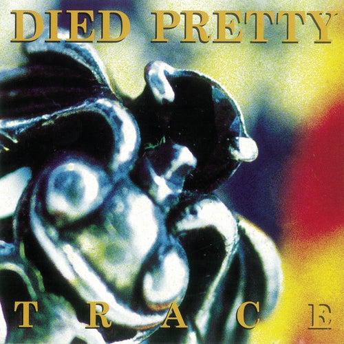 TRACE di Died Pretty