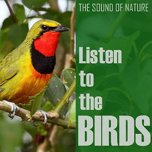 Listen to the Birds by The Birds