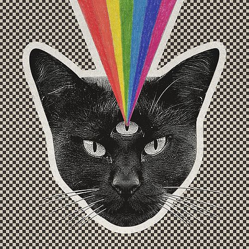 Black Cat by Never Shout Never