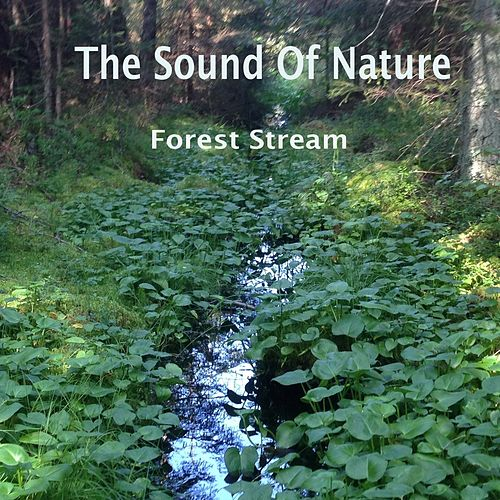 Forest Stream di The Sound of Nature