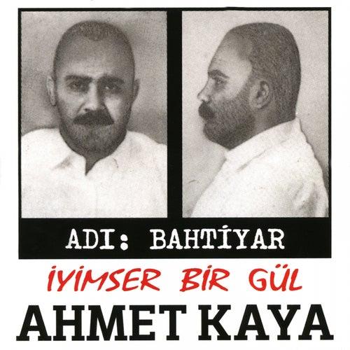 İyimser Bir Gül von Ahmet Kaya
