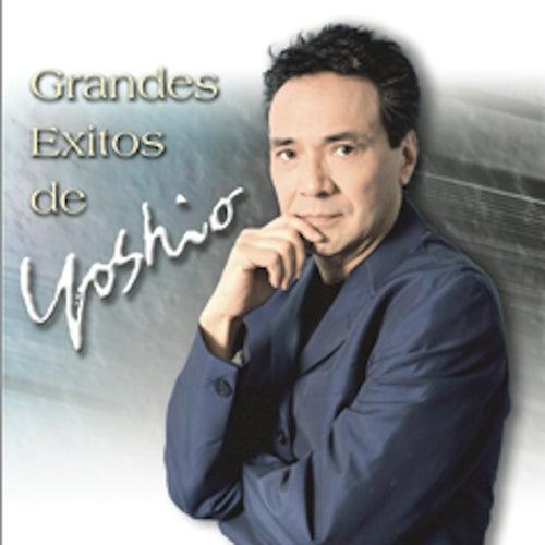 Grandes Exitos by Yoshio