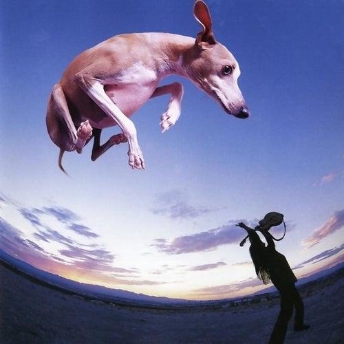 Flying Dog by Paul Gilbert