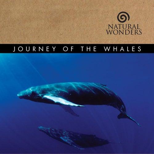 Journey Of The Whales de David Arkenstone