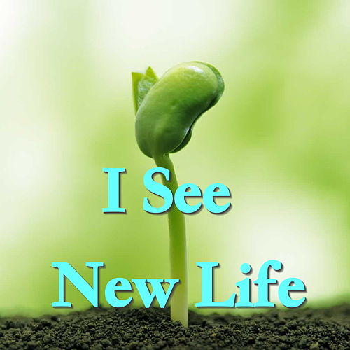 I See New Life by Various Artists