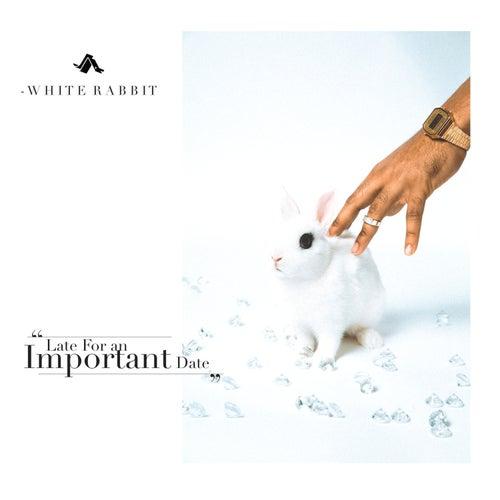 White Rabbit de Jay Ant