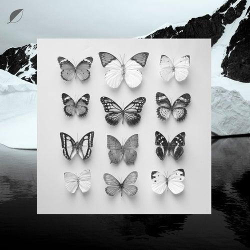 Young Alaska von Christian Löffler