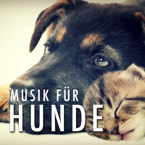 Musik für Hunde zum Einschlafen by Various Artists