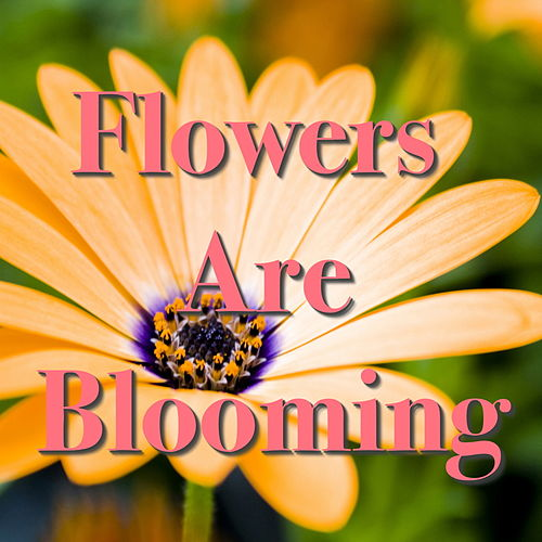 Flowers Are Blooming de Various Artists