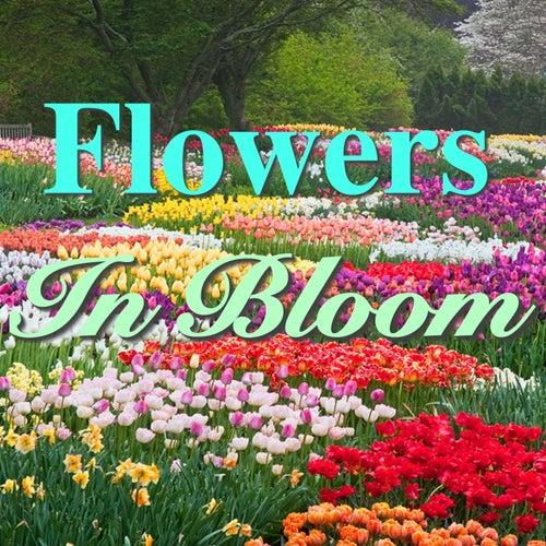 Flowers In Bloom by Various Artists