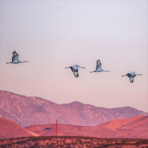 Holding Pattern by Matthew Larsen and The Documents