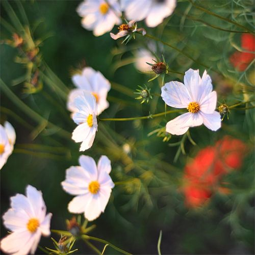 Wildflower (1) by Jayesh
