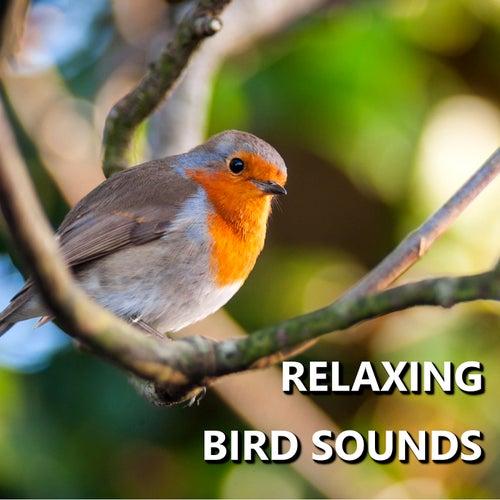 Relaxing Bird Sounds by Bird Sounds