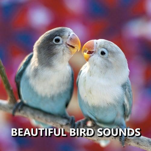 Beautiful Bird Sounds by Bird Sounds