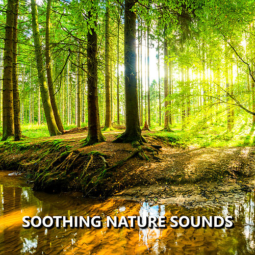 Soothing Nature Sounds by Nature Sounds (1)