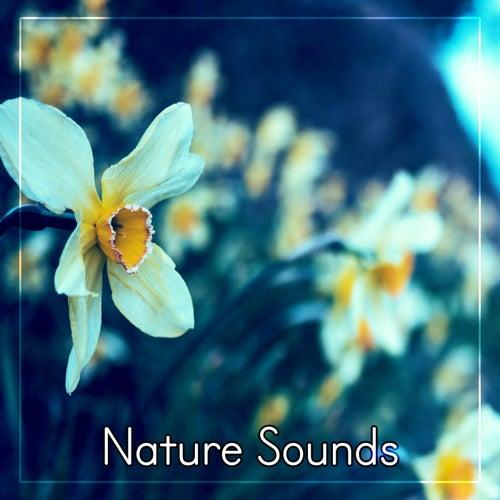 Spring Rain de Echoes of Nature : Napster