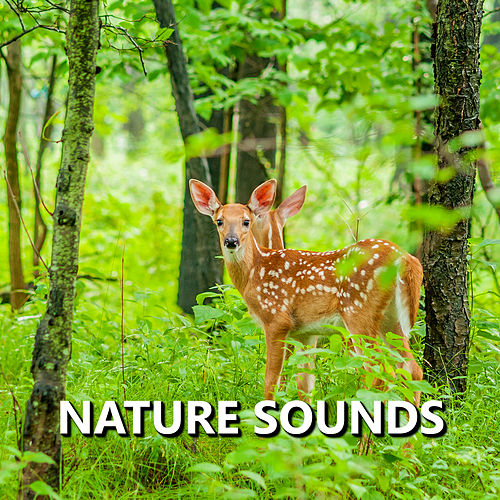 Nature Sounds de Nature Sound Collection