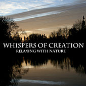 Whispers of Creation by Bore