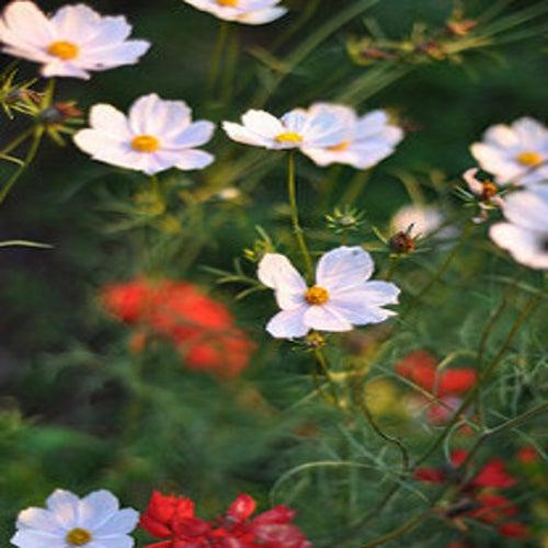 Wildflower by Jayesh