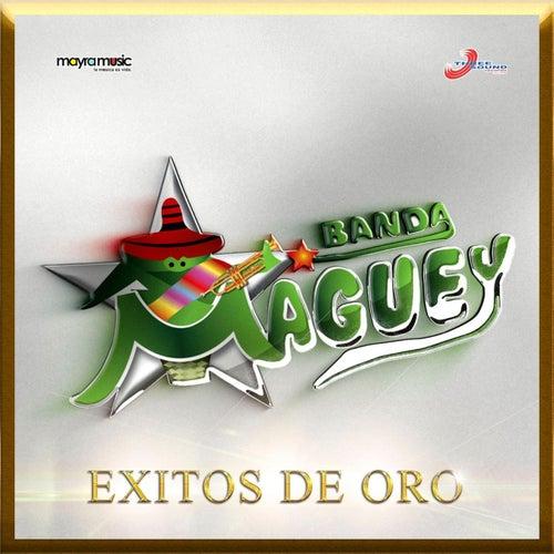 Exitos De Oro by Banda Maguey