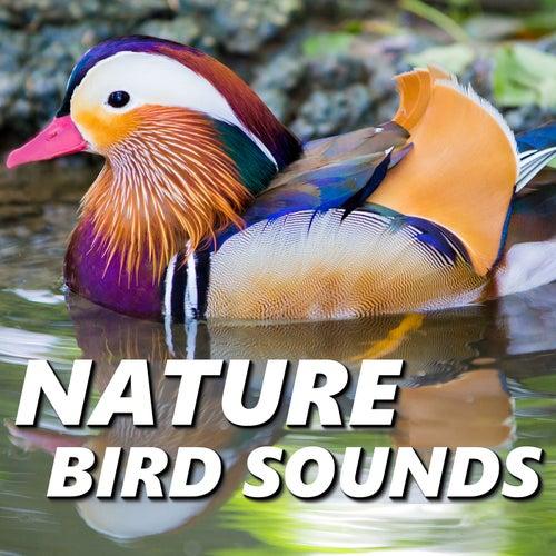 Nature Bird Sounds by Nature Bird Sounds