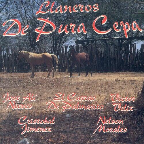 Llaneros de Pura Cepa de Various Artists
