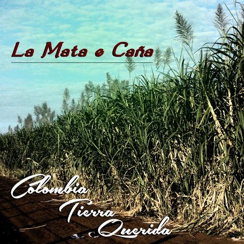 La Mata 'e Caña (Colombia Tierra Querida) de Various Artists