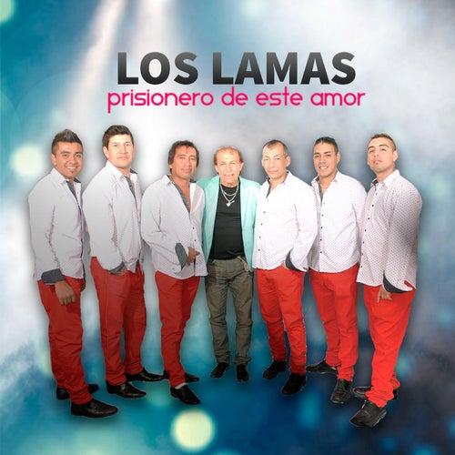 Prisionero de Este Amor de Los Lamas