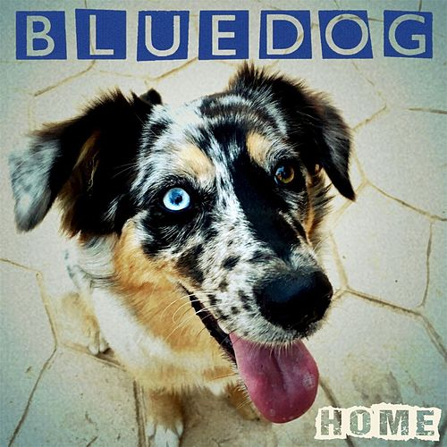 Home de Blue Dog