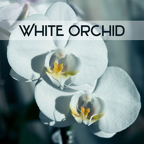 White Orchid - Moment to Breath, Wonderful Glow, Heavenly Light, Holy Peace de soundscapes