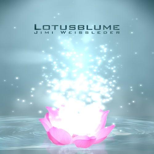 Lotusblume by Jimi Weissleder