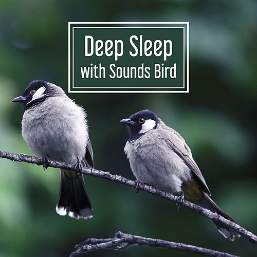 Deep Sleep with Sounds Birds – Music for Relaxation, Deep Meditation, Peaceful Mind, Calm Guitar, Restful Sounds by Nature Sounds (1)