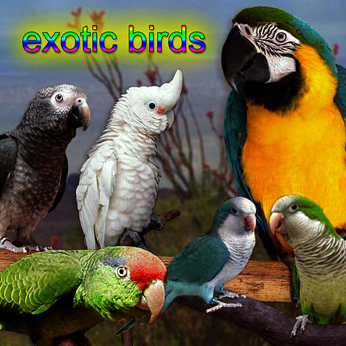 Exotic Birds by Bird Sounds