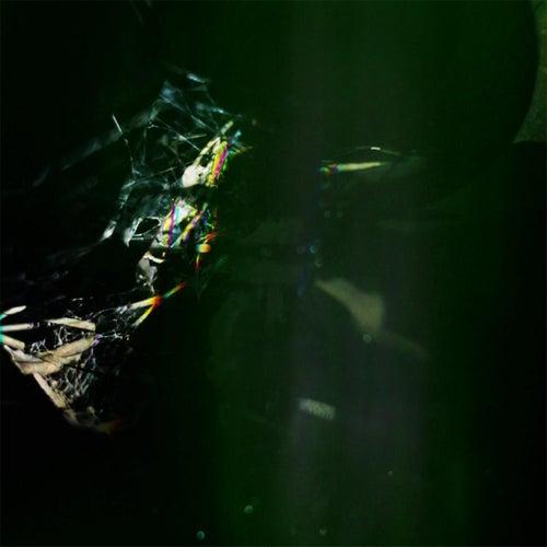 Dark Green by Dali Vision