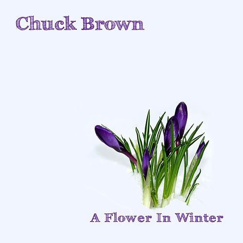 A Flower in Winter by Chuck Brown