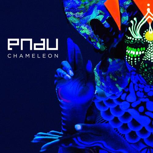 Chameleon von PNAU