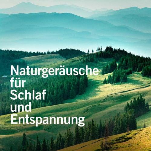 Naturgeräusche für Schlaf und Entspannung von Various Artists