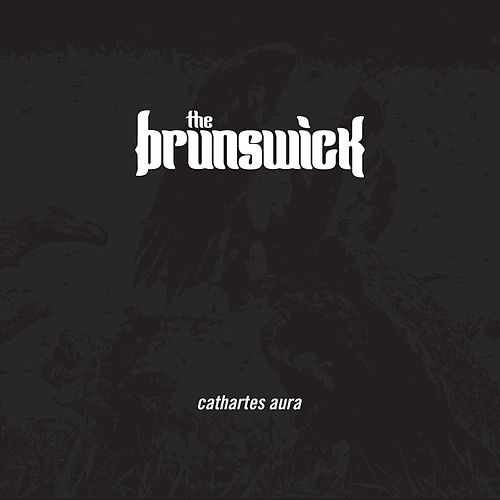 Cathartes Aura by BRUNSWICK