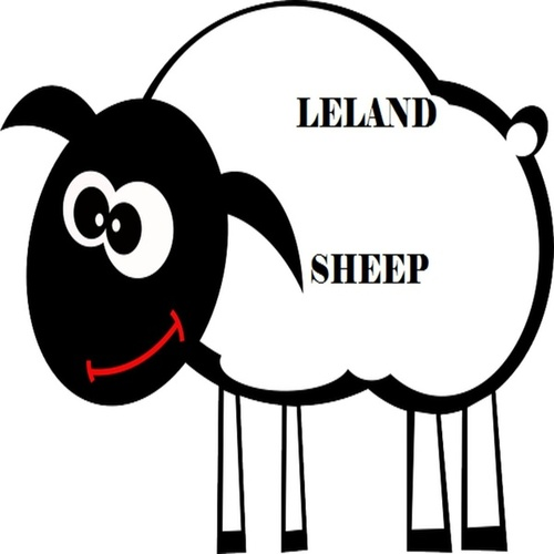 Sheep by Leland