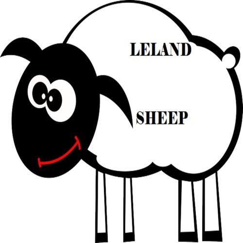 Sheep di Leland
