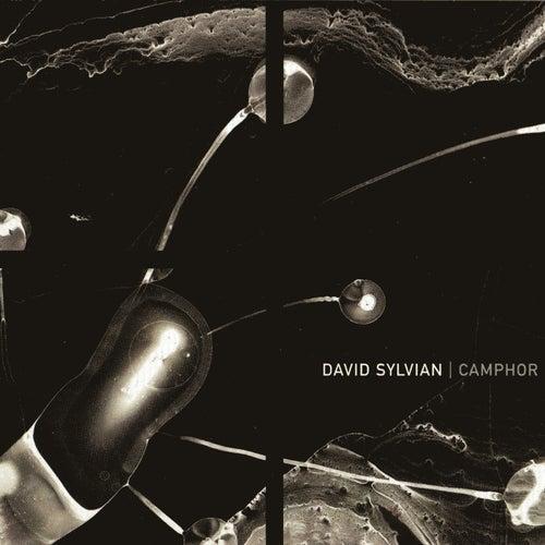 Camphor by David Sylvian