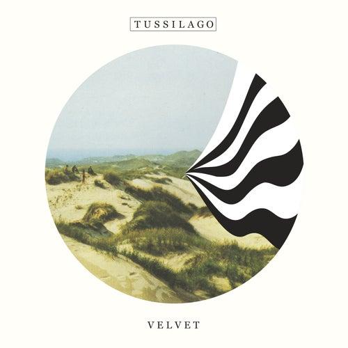 Velvet von Tussilago