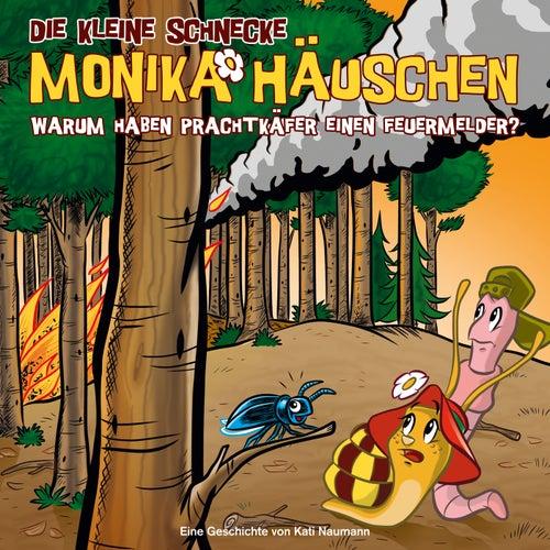 48: Warum haben Prachtkäfer einen Feuermelder? von Die kleine Schnecke Monika Häuschen